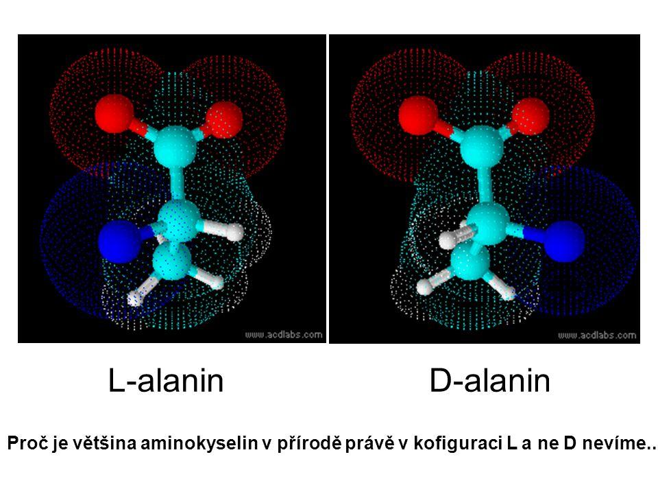 L-alaninD-alanin Proč je většina aminokyselin v přírodě právě v kofiguraci L a ne D nevíme..