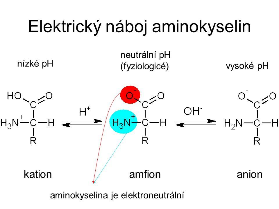 Elektrický náboj aminokyselin kationanionamfion neutrální pH (fyziologicé) nízké pH vysoké pH aminokyselina je elektroneutrální
