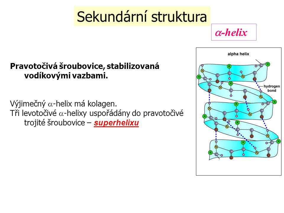 Sekundární struktura Pravotočivá šroubovice, stabilizovaná vodíkovými vazbami. Výjimečný  -helix má kolagen. Tři levotočivé  -helixy uspořádány do p