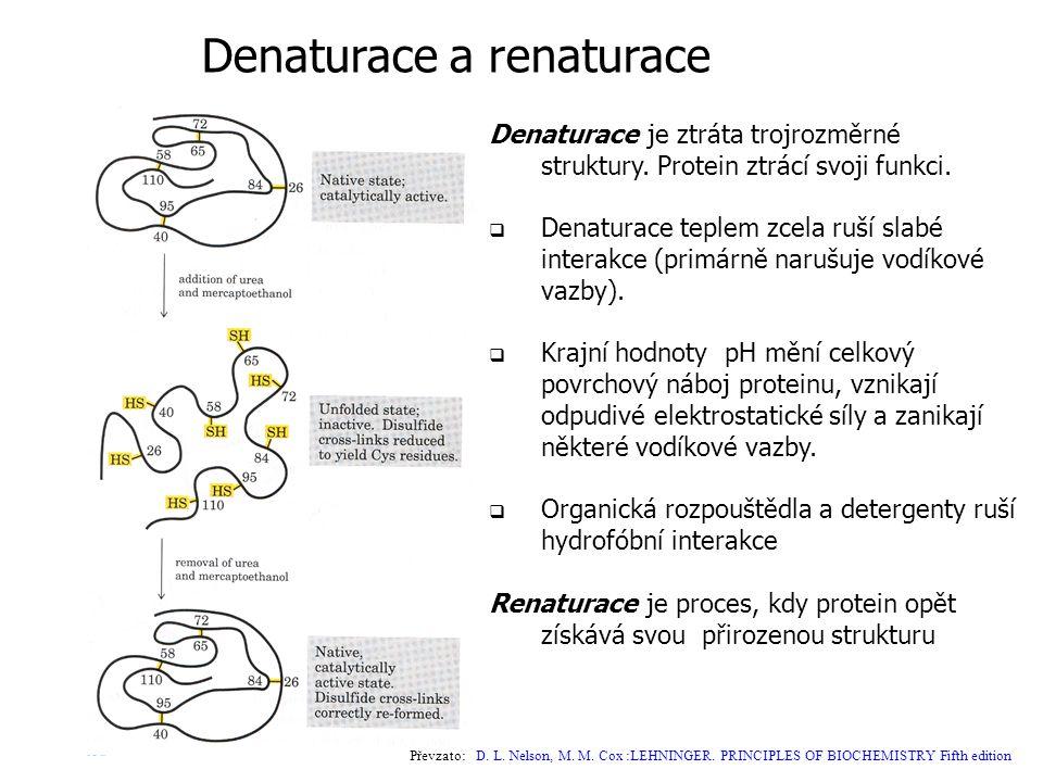 Denaturace a renaturace Denaturace je ztráta trojrozměrné struktury. Protein ztrácí svoji funkci.  Denaturace teplem zcela ruší slabé interakce (prim