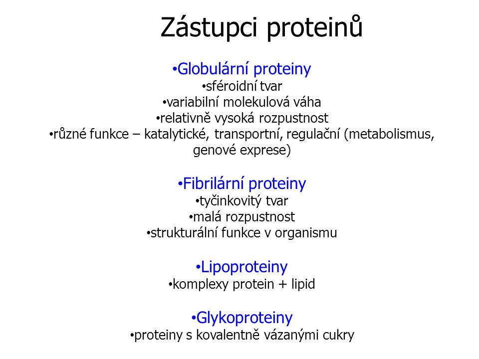 Zástupci proteinů Globulární proteiny sféroidní tvar variabilní molekulová váha relativně vysoká rozpustnost různé funkce – katalytické, transportní,