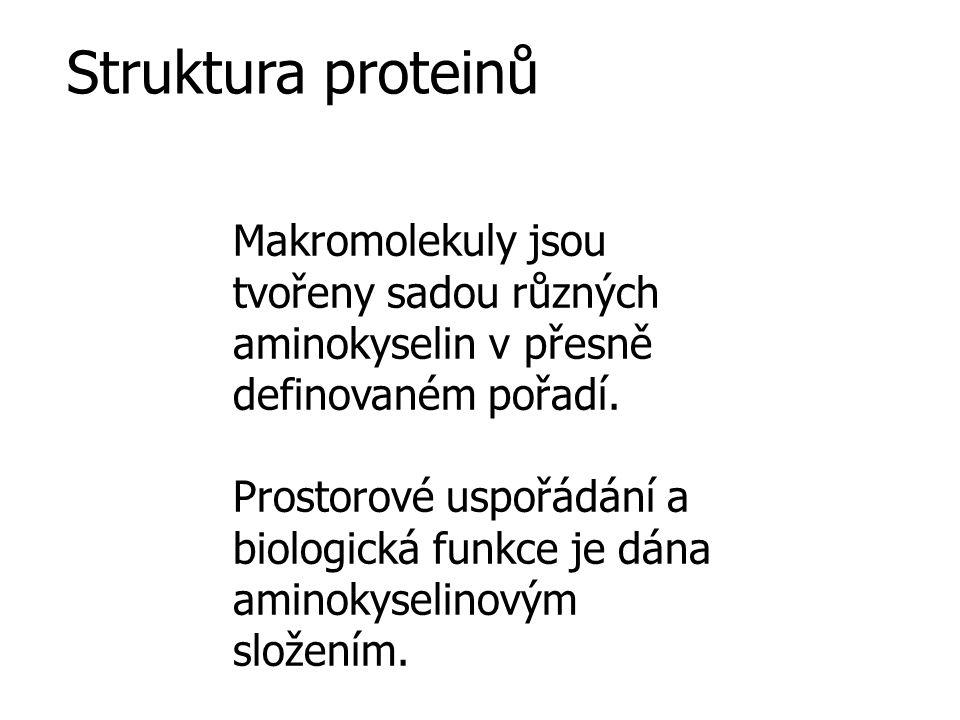 Zástupci proteinů Globulární proteiny sféroidní tvar variabilní molekulová váha relativně vysoká rozpustnost různé funkce – katalytické, transportní, regulační (metabolismus, genové exprese) Fibrilární proteiny tyčinkovitý tvar malá rozpustnost strukturální funkce v organismu Lipoproteiny komplexy protein + lipid Glykoproteiny proteiny s kovalentně vázanými cukry