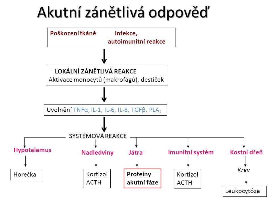 Akutní zánětlivá odpověď Hypotalamus Poškození tkáně Infekce, autoimunitní reakce LOKÁLNÍ ZÁNĚTLIVÁ REAKCE Aktivace monocytů (makrofágů), destiček Uvo