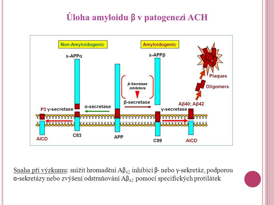 Úloha amyloidu β v patogenezi ACH Snaha při výzkumu: snížit hromadění A β 42 inhibicí β- nebo γ- sekretáz, podporou α -sekretázy nebo zvýšení odstraňování A β 42 pomocí specifických protilátek