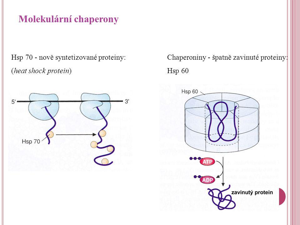 DNA RNA Ribosom Nativní protein Protein s patologickou konformací Chaperony Ubikvitin ATP Degradovaný protein Ztráta funkce (Cystická fibróza) Proteasom Agregát/fibrilární amyloid Chaperony Toxická bílkovina (Alzheimerova choroba) Ukládání (Amyloidózy)
