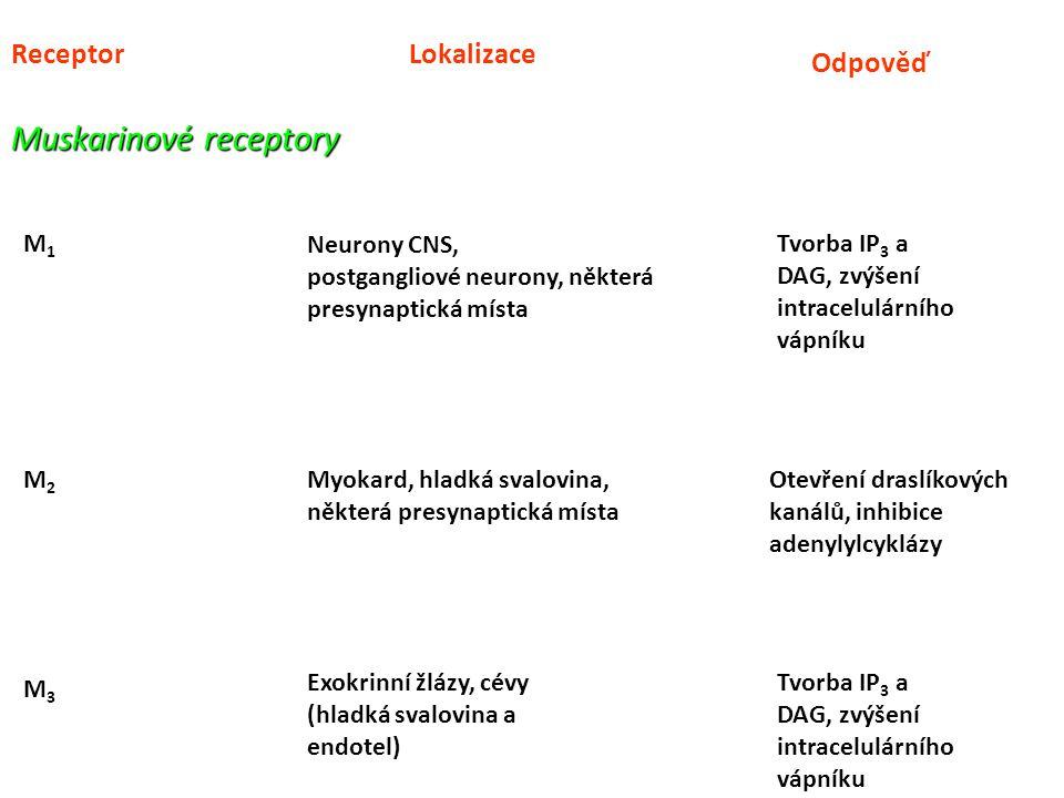 ReceptorLokalizace Odpověď Muskarinové receptory M1M1 M2M2 M3M3 Neurony CNS, postgangliové neurony, některá presynaptická místa Tvorba IP 3 a DAG, zvý