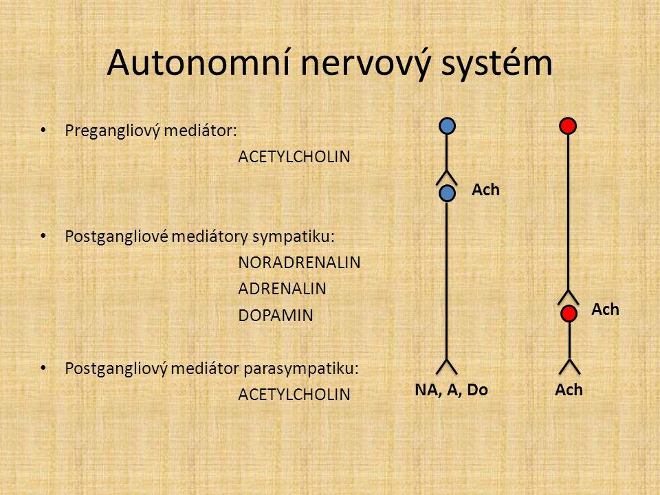 Autonomní nervový systém Pregangliový mediátor: ACETYLCHOLIN Postgangliové mediátory sympatiku: NORADRENALIN ADRENALIN DOPAMIN Postgangliový mediátor