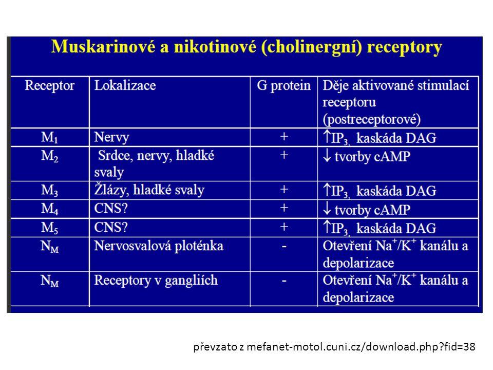 převzato z mefanet-motol.cuni.cz/download.php?fid=38