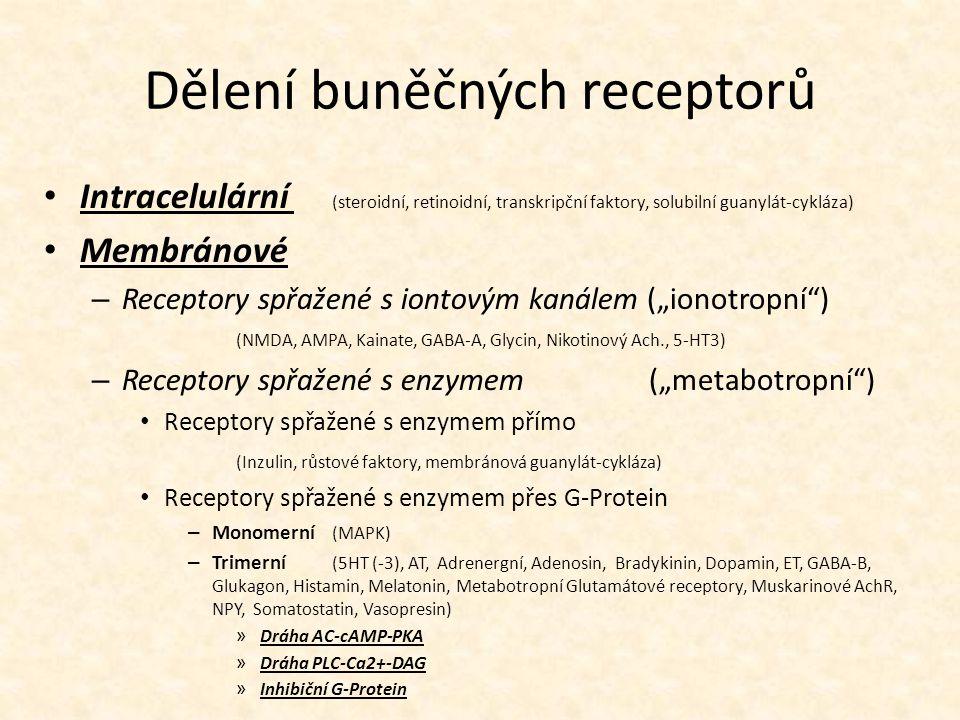 Dělení buněčných receptorů Intracelulární (steroidní, retinoidní, transkripční faktory, solubilní guanylát-cykláza) Membránové – Receptory spřažené s