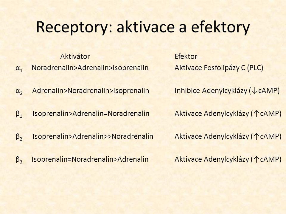 Receptory: aktivace a efektory AktivátorEfektor α 1 Noradrenalin>Adrenalin>IsoprenalinAktivace Fosfolipázy C (PLC) α 2 Adrenalin>Noradrenalin>Isoprena