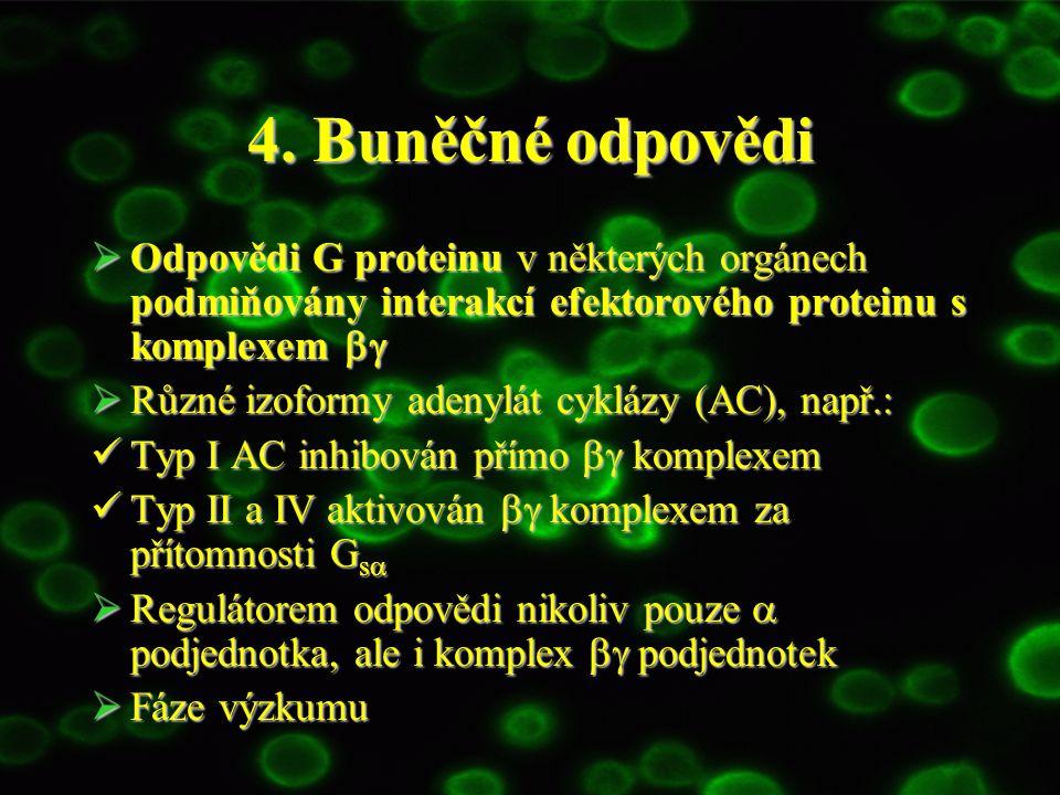 4. Buněčné odpovědi  Odpovědi G proteinu v některých orgánech podmiňovány interakcí efektorového proteinu s komplexem   Různé izoformy adenylát cy
