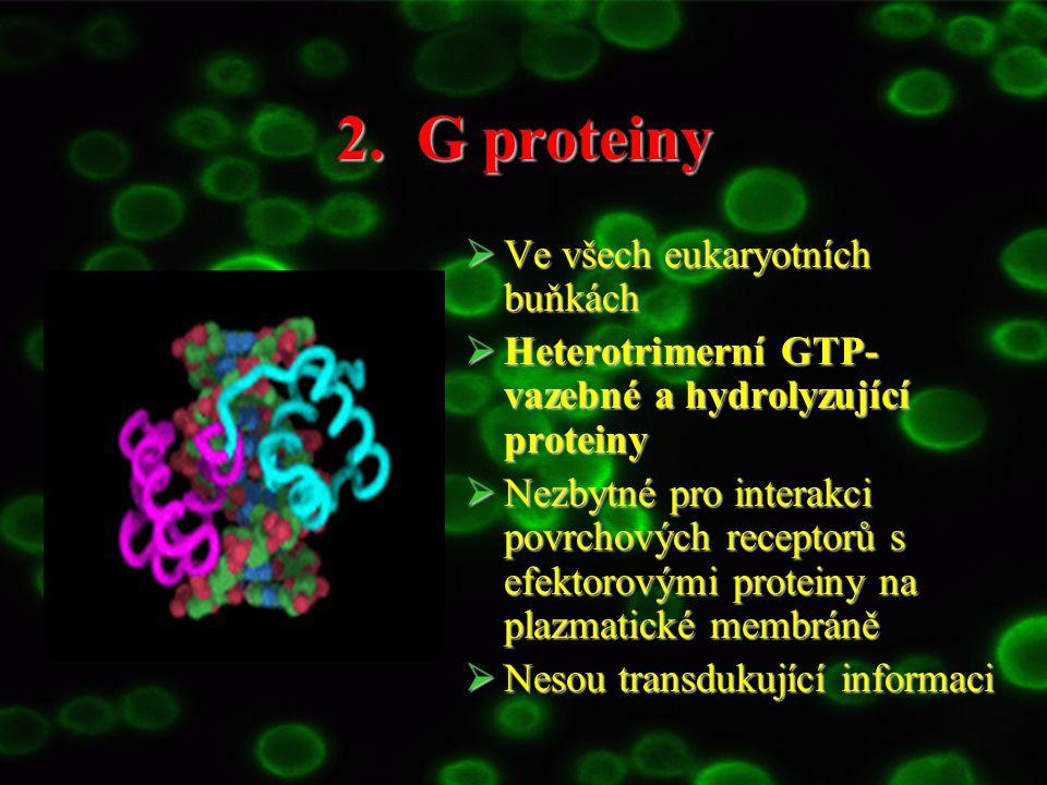 2. G proteiny  Ve všech eukaryotních buňkách  Heterotrimerní GTP- vazebné a hydrolyzující proteiny  Nezbytné pro interakci povrchových receptorů s