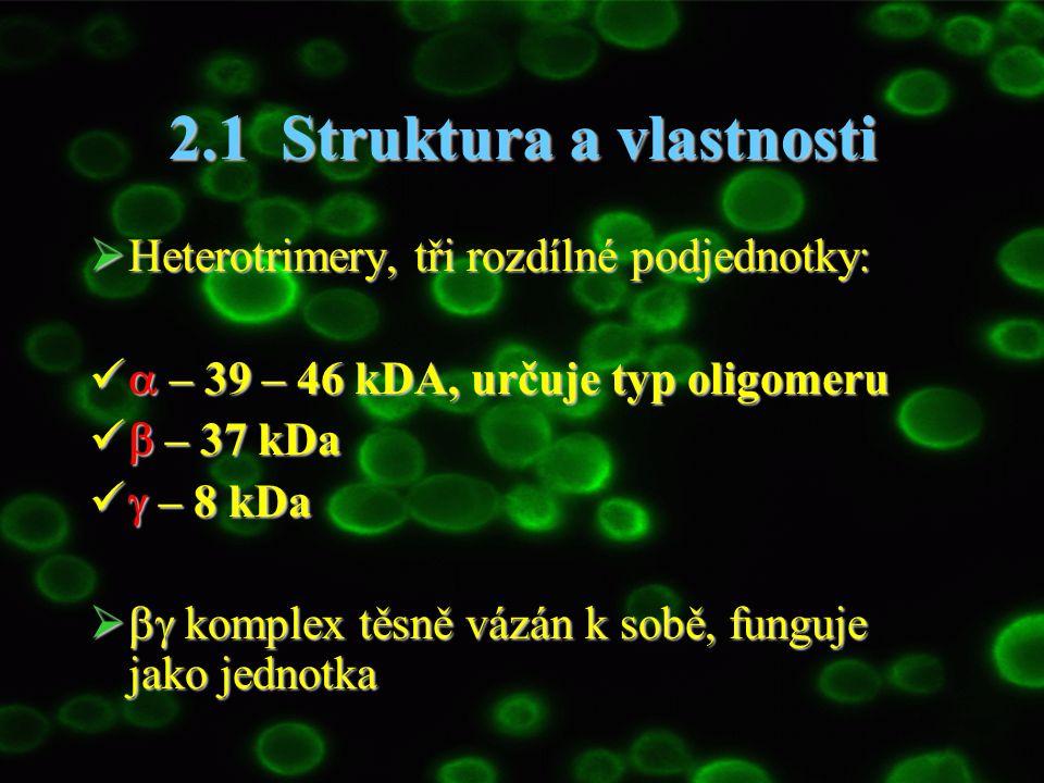 2.1 Struktura a vlastnosti  Heterotrimery, tři rozdílné podjednotky:  – 39 – 46 kDA, určuje typ oligomeru  – 39 – 46 kDA, určuje typ oligomeru  –