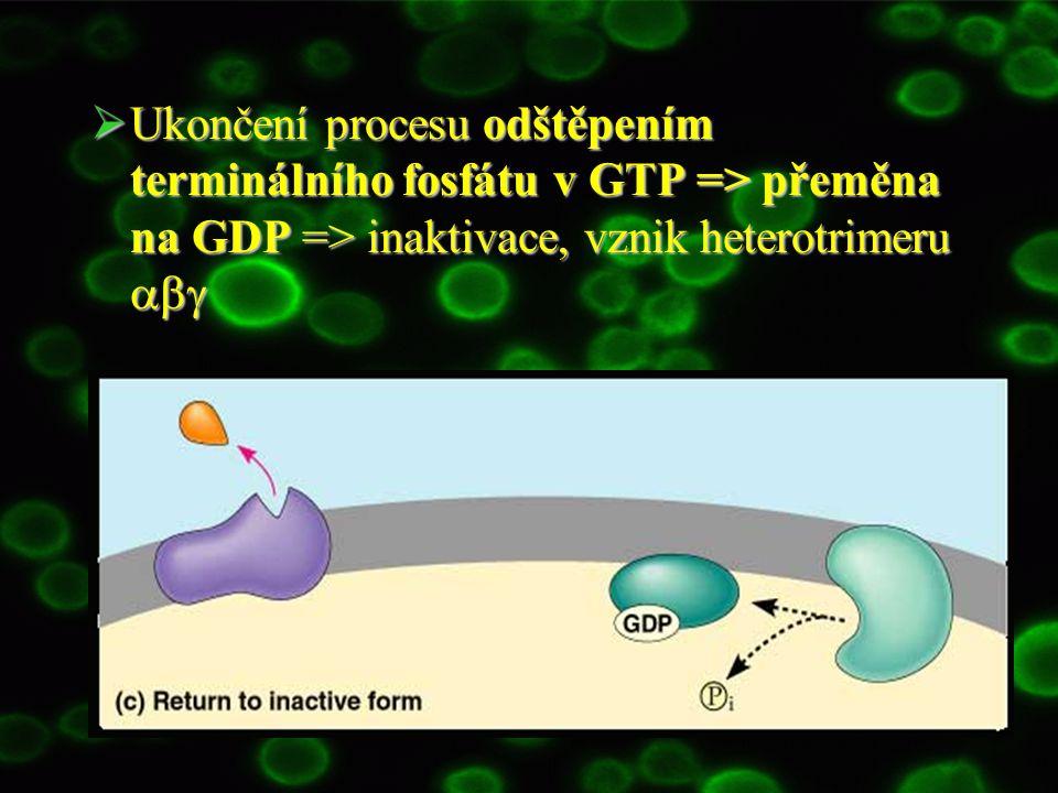  Princip: Fotony => retinal mění konfiguraci z cis na trans => aktivace rhodopsinu => transducin G t fosforylován => další postup stejně jako u ostatních G proteinů Fotony => retinal mění konfiguraci z cis na trans => aktivace rhodopsinu => transducin G t fosforylován => další postup stejně jako u ostatních G proteinů