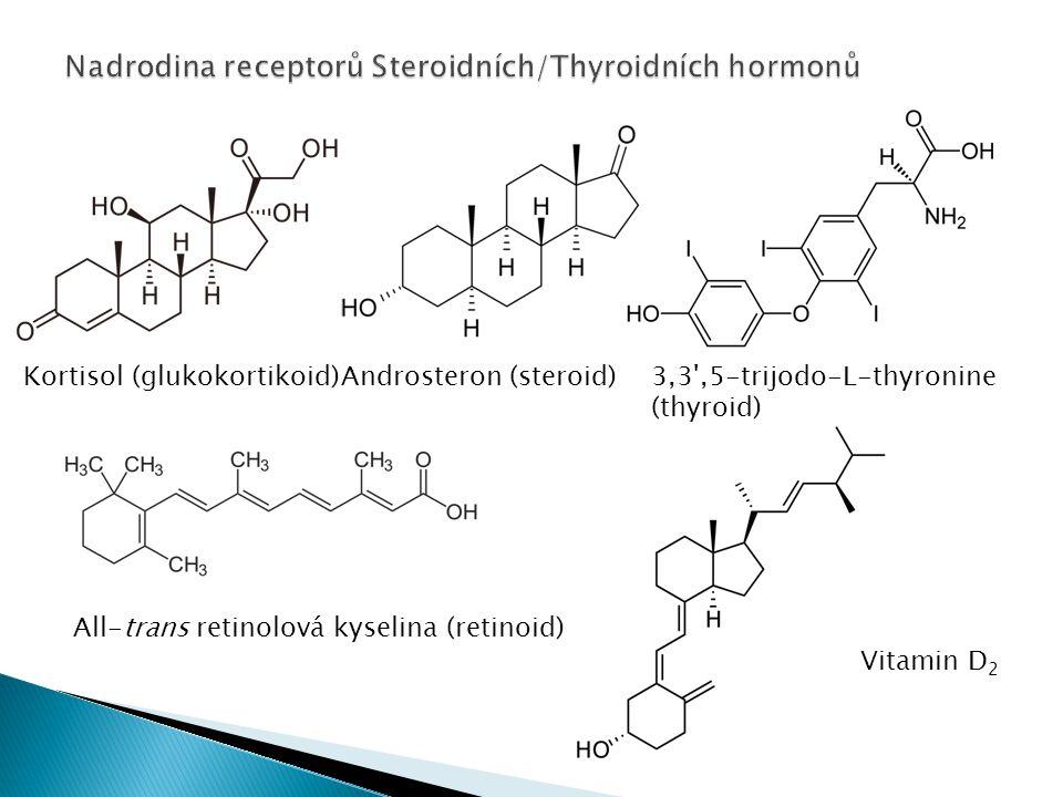Kortisol (glukokortikoid)Androsteron (steroid)3,3',5-trijodo-L-thyronine (thyroid) All-trans retinolová kyselina (retinoid) Vitamin D 2