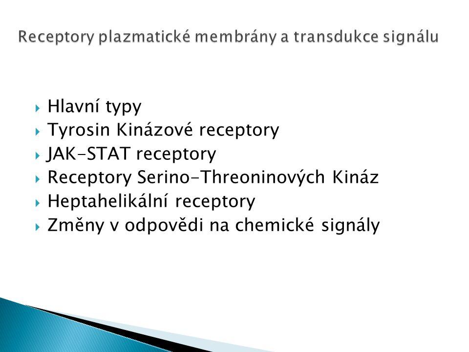  Hlavní typy  Tyrosin Kinázové receptory  JAK-STAT receptory  Receptory Serino-Threoninových Kináz  Heptahelikální receptory  Změny v odpovědi n