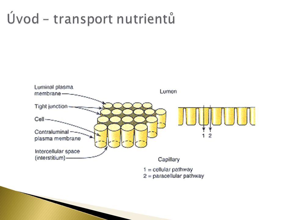  Glukagon aktivuje fenylalaninovou hydroxylasu cestou adenosine 3′5′-cyclic monophosphate (cAMP)-dependentní dráhy.