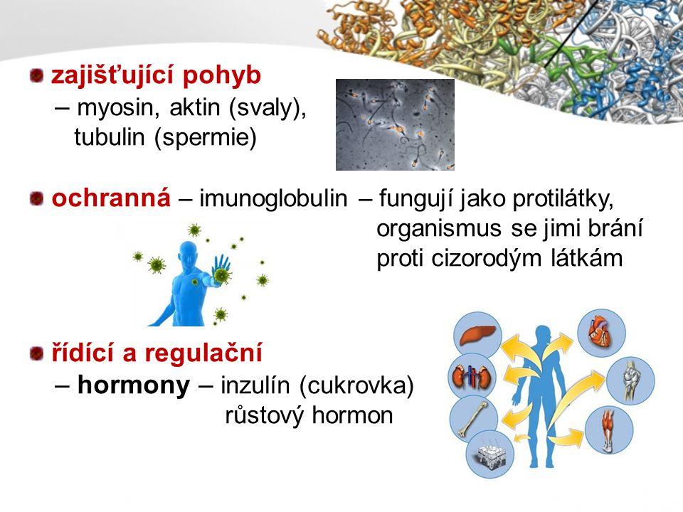 zajišťující pohyb – myosin, aktin (svaly), tubulin (spermie) ochranná – imunoglobulin – fungují jako protilátky, organismus se jimi brání proti cizoro