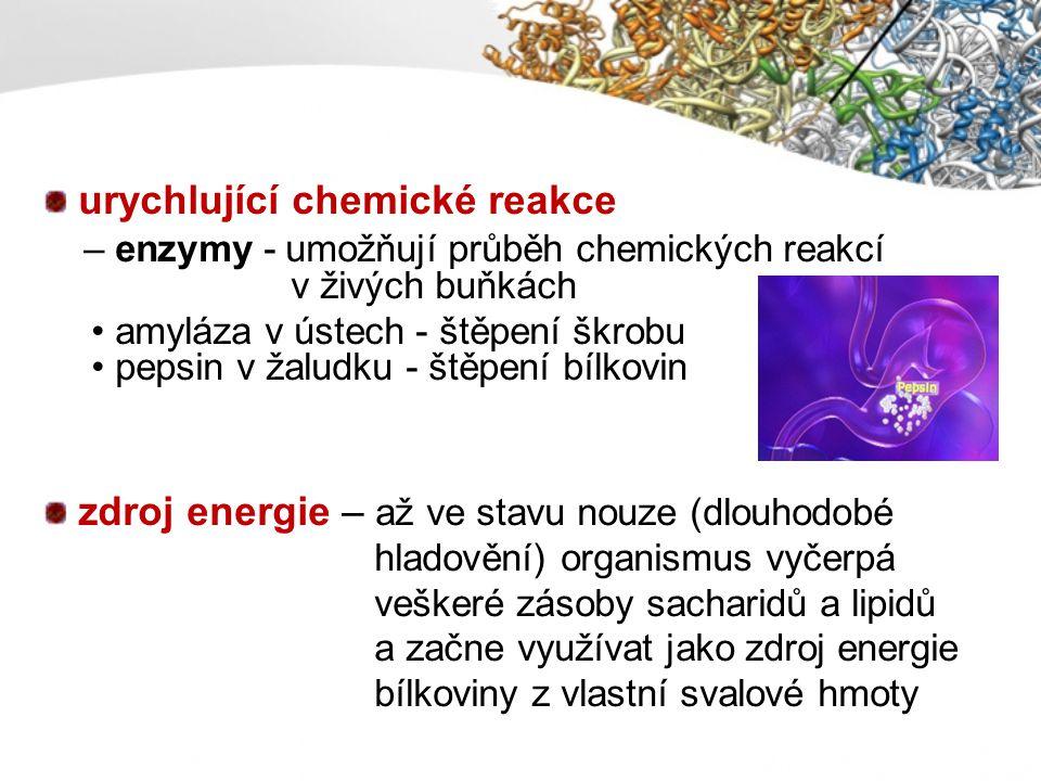 urychlující chemické reakce – enzymy - umožňují průběh chemických reakcí v živých buňkách amyláza v ústech - štěpení škrobu pepsin v žaludku - štěpení