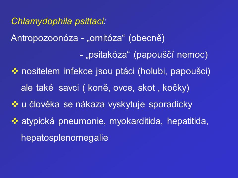 """Chlamydophila psittaci: Antropozoonóza - """"ornitóza"""" (obecně) - """"psitakóza"""" (papouščí nemoc)  nositelem infekce jsou ptáci (holubi, papoušci) ale také"""