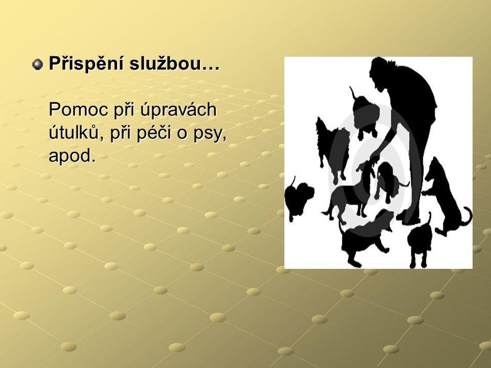 Přispění službou… Pomoc při úpravách útulků, při péči o psy, apod.