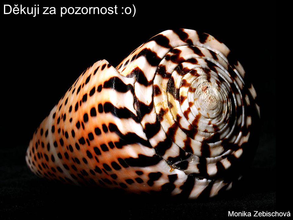 Děkuji za pozornost :o) Monika Zebischová