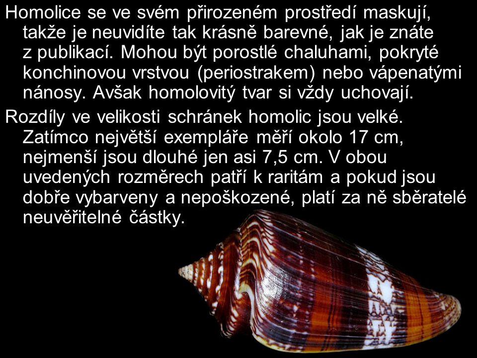 Monstra mezi homolicemi Angličané jim říkají freaks a česky se správně nazývají monstrosity.