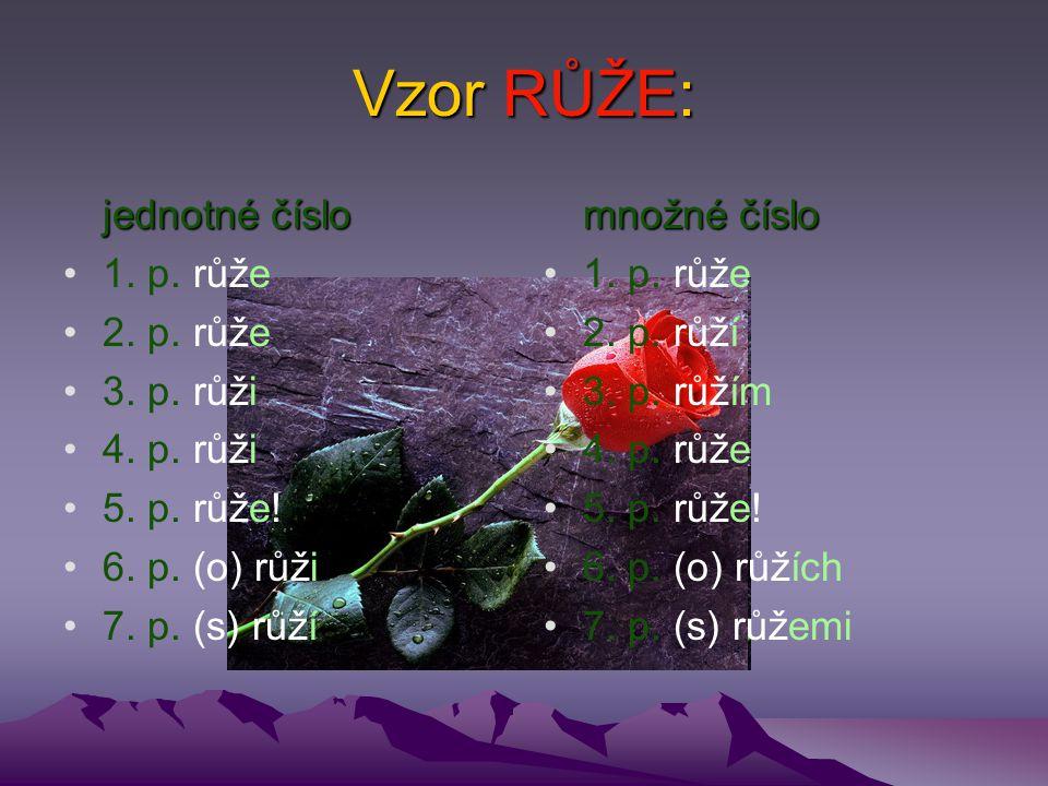 Vzor RŮŽE: jednotné číslo 1. p. růže 2. p. růže 3. p. růži 4. p. růži 5. p. růže! 6. p. (o) růži 7. p. (s) růží množné číslo 1. p. růže 2. p. růží 3.