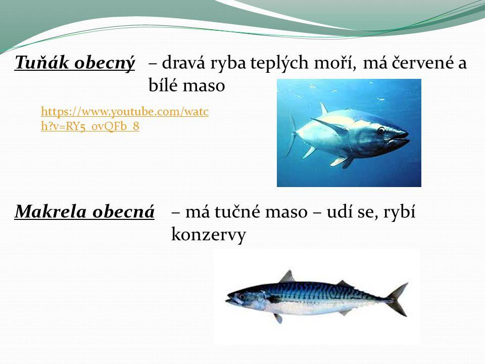 Tuňák obecný– dravá ryba teplých moří, má červené a bílé maso Makrela obecná– má tučné maso – udí se, rybí konzervy https://www.youtube.com/watc h?v=RY5_0vQFb_8