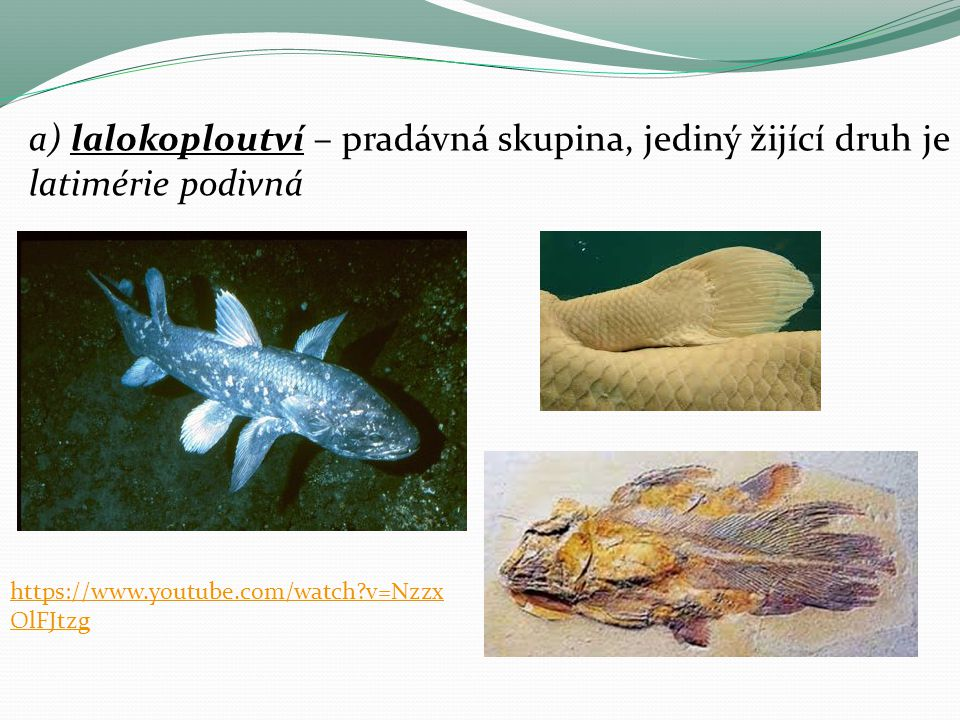 a) lalokoploutví – pradávná skupina, jediný žijící druh je latimérie podivná https://www.youtube.com/watch?v=Nzzx OlFJtzg
