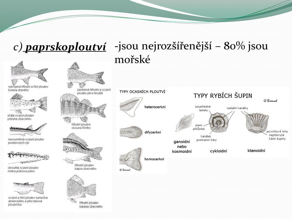 Sardinka obecná – drobná mořská ryba, žije ve velkých hejnech, živí se planktonem (olejovky) Losos obecný– podobá se pstruhovi, dospívá v mořích, dospělí vplouvají do řek, tam se třou, mladí tam žijí 2-3 roky a pak putují do moří.