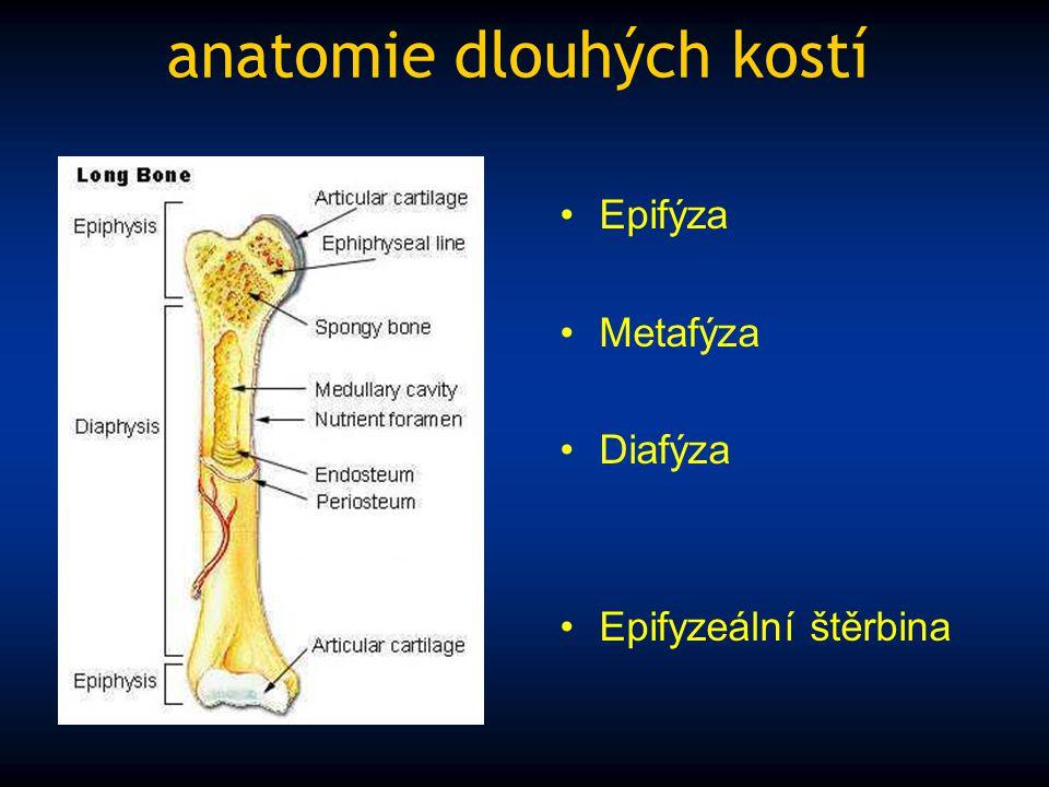anatomie dlouhých kostí Epifýza Metafýza Diafýza Epifyzeální štěrbina