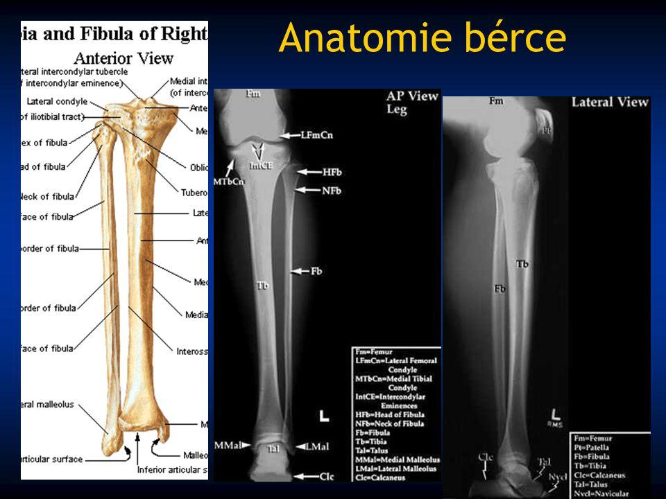 Anatomie bérce