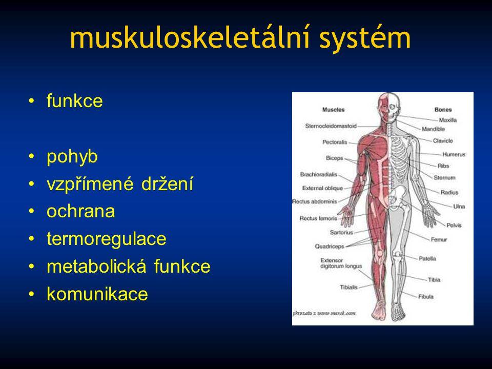 muskuloskeletální systém funkce pohyb vzpřímené držení ochrana termoregulace metabolická funkce komunikace