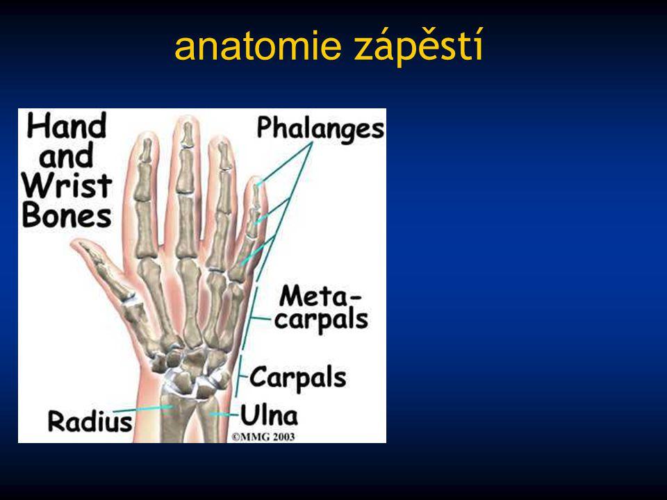 anatomie zápěstí