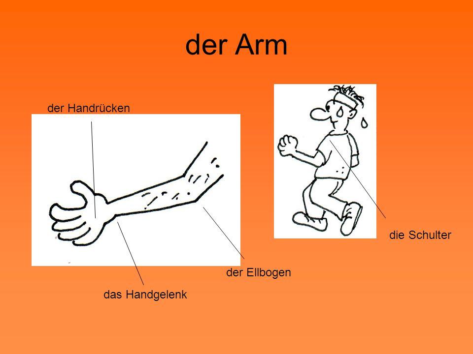 der Arm der Ellbogen das Handgelenk die Schulter der Handrücken