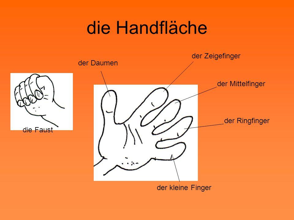 der kleine Finger der Daumen der Zeigefinger der Mittelfinger der Ringfinger die Handfläche die Faust
