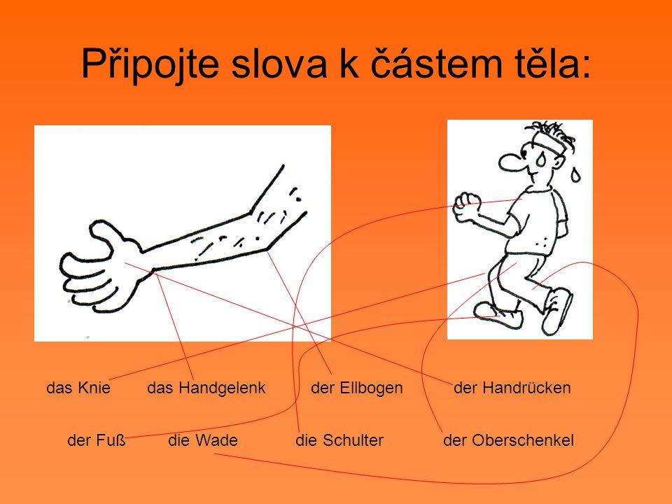 Připojte slova k částem těla: der Ellbogendas Handgelenk die Schulter der Handrücken der Oberschenkeldie Wadeder Fuß das Knie