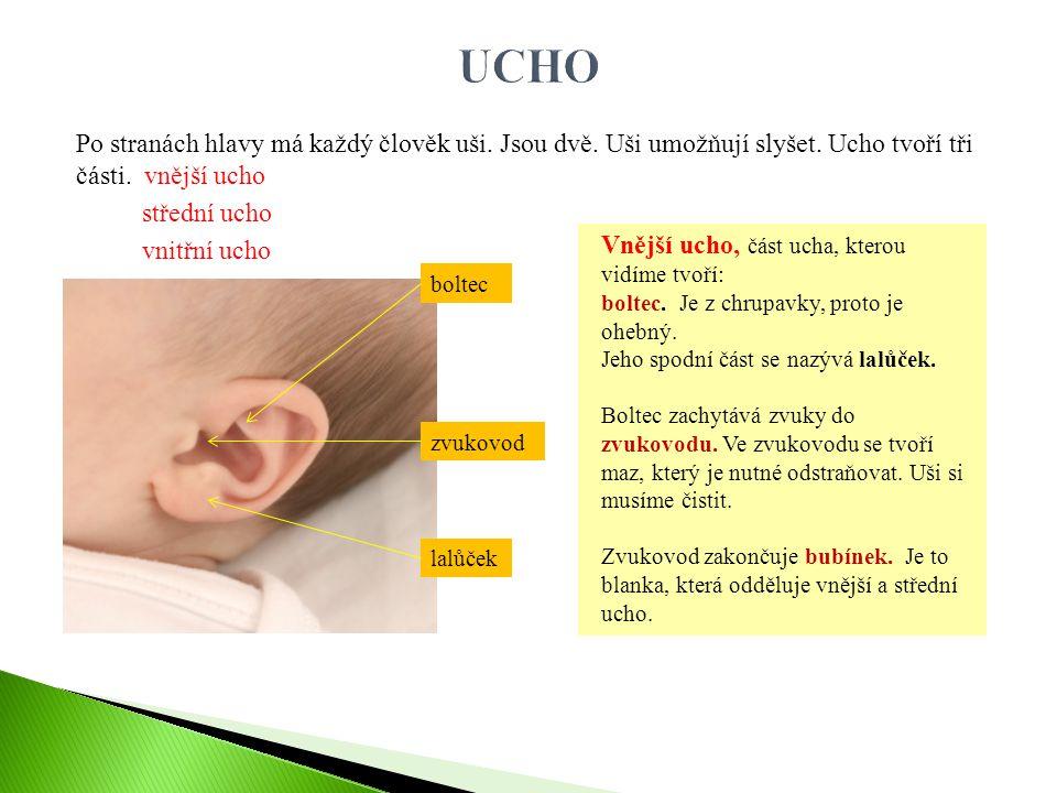Po stranách hlavy má každý člověk uši. Jsou dvě. Uši umožňují slyšet. Ucho tvoří tři části. vnější ucho střední ucho vnitřní ucho Vnější ucho, část uc