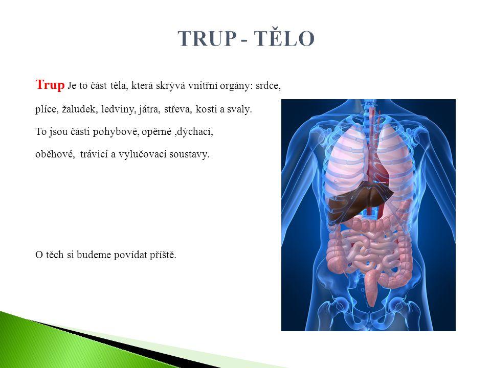 Trup Je to část těla, která skrývá vnitřní orgány: srdce, plíce, žaludek, ledviny, játra, střeva, kosti a svaly. To jsou části pohybové, opěrné,dýchac