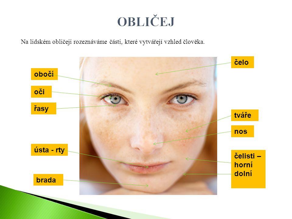 Na lidském obličeji rozeznáváme části, které vytvářejí vzhled člověka. čelo obočí oči řasy tváře nos ústa - rty čelisti – horní dolní brada