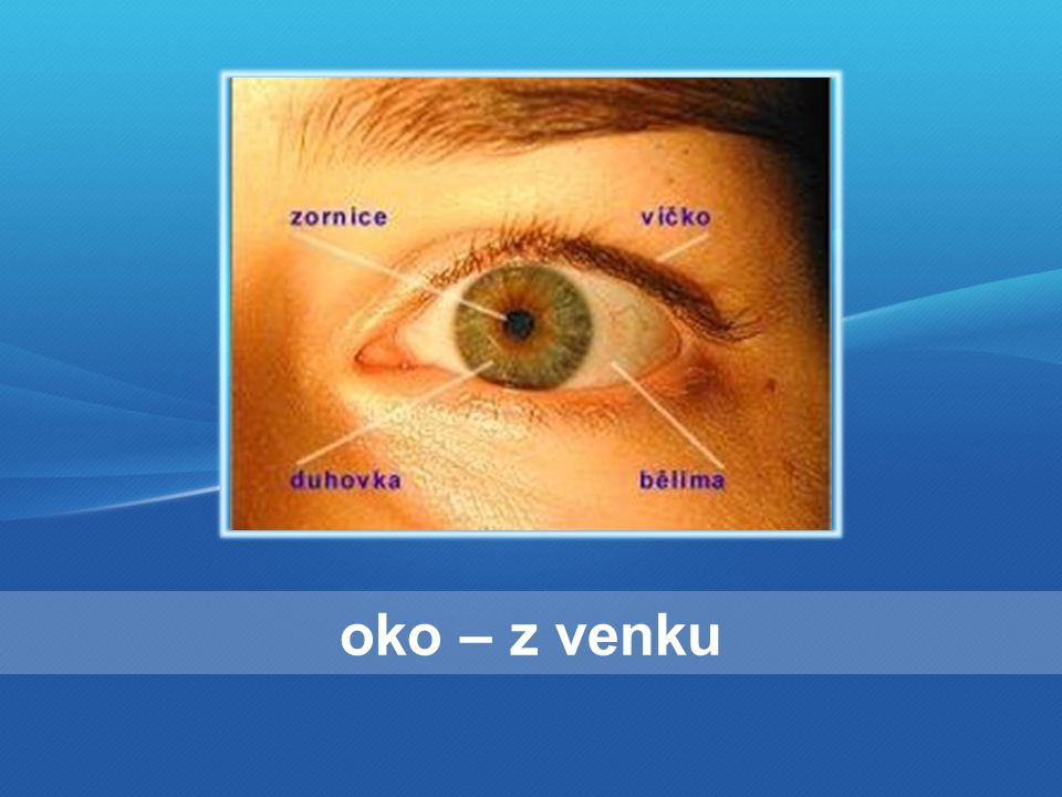 oko – zevnitř