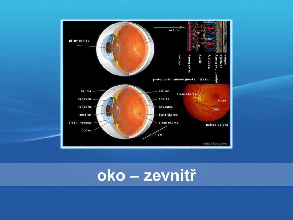 oko – v detailu