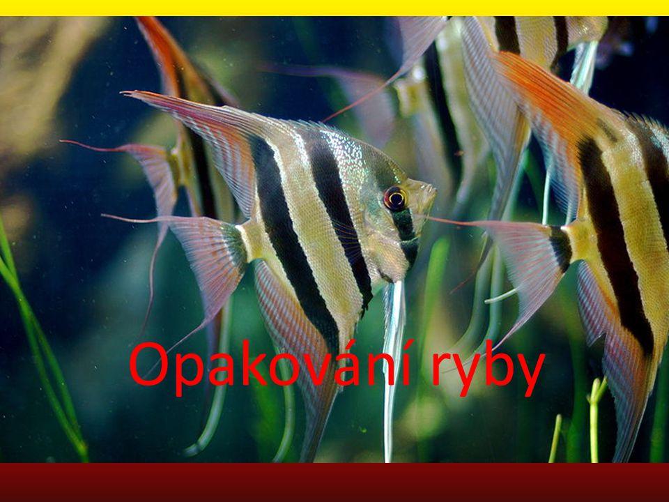 Doplň stavbu těla ryby Zde se nachází ……………… hlavatrup Zde je ocasní ploutev …………………….