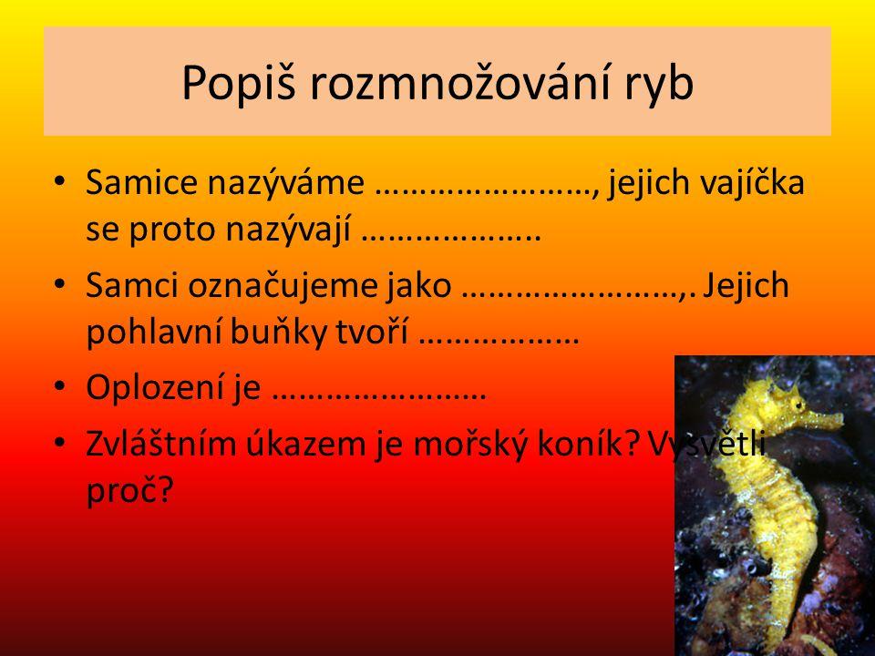 Popiš rozmnožování ryb Samice nazýváme jikernačky, jejich vajíčka se proto nazývají jikry Samci označujeme jako mlíčňáci.