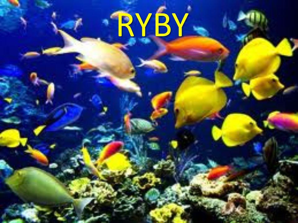 RYBY vodní sladkovodní mořské