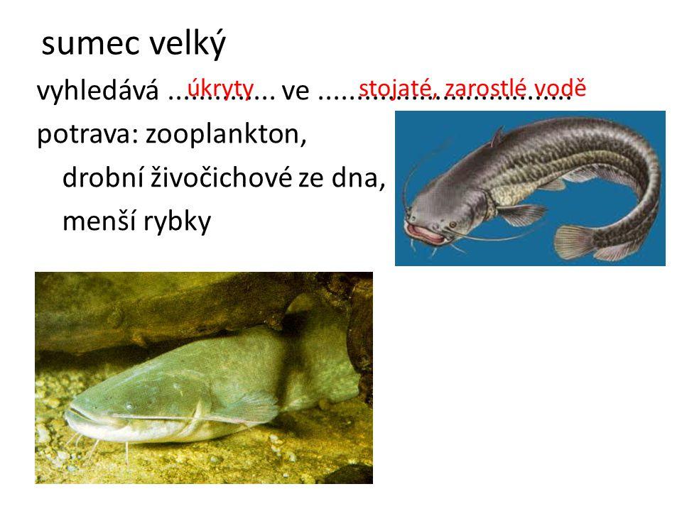sumec velký vyhledává.............. ve................................. potrava: zooplankton, drobní živočichové ze dna, menší rybky úkrytystojaté, za