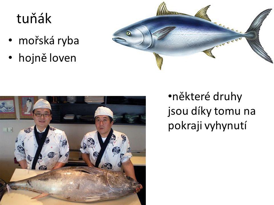 mořská ryba hojně loven tuňák některé druhy jsou díky tomu na pokraji vyhynutí