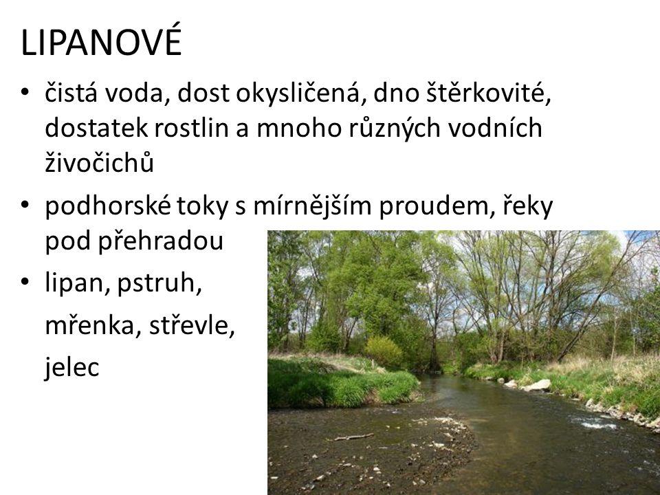 LIPANOVÉ čistá voda, dost okysličená, dno štěrkovité, dostatek rostlin a mnoho různých vodních živočichů podhorské toky s mírnějším proudem, řeky pod