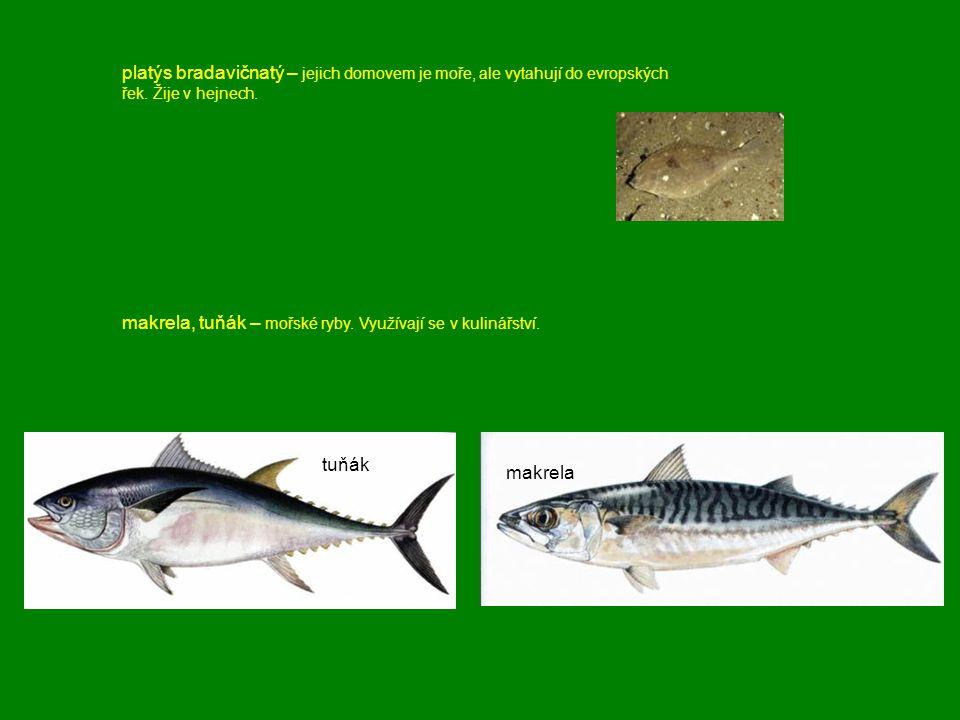 platýs bradavičnatý – jejich domovem je moře, ale vytahují do evropských řek. Žije v hejnech. makrela, tuňák – mořské ryby. Využívají se v kulinářství